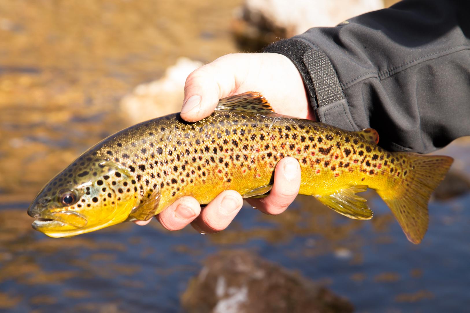2016-04-15-Spring-Fishing-Hot-Creek-WRAY-3666.jpg